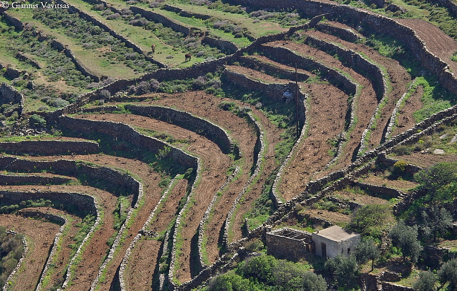 Terraces in Ligero